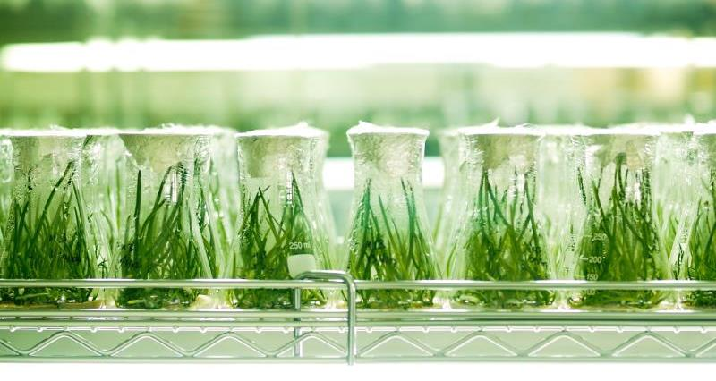 European Patent Office (EPO) - Board of Appeal Decision in case T 1063/18 on the Patentability of Plants